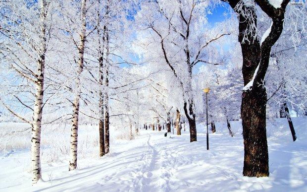 snowy-park-wallpaper
